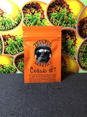 Collab 7 ThugPug