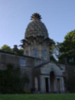 1. Dunmore Pineapple Selkov.jpg