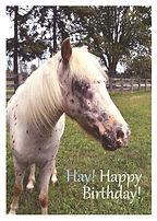 Hay Happy Birthday - Front.jpg