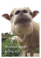 Herd Ewe Weren't Feeling Well - Front.jp