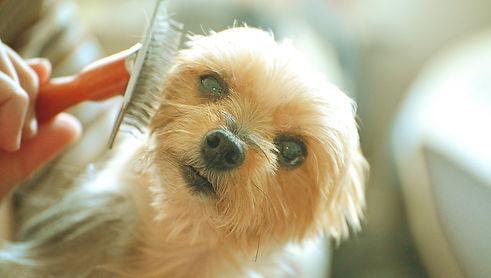 brushing-dog-3.jpg