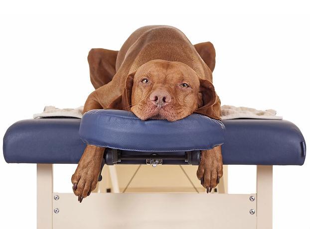 dog-massage1.jpg