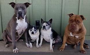 Lee Oululani Plevney's studio dogs