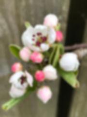 April fb.jpeg
