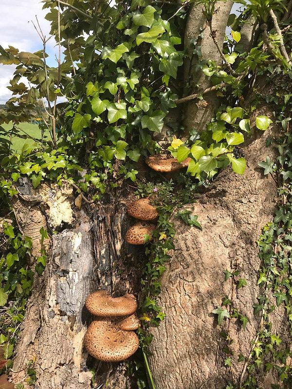 Fungi 2.jpeg