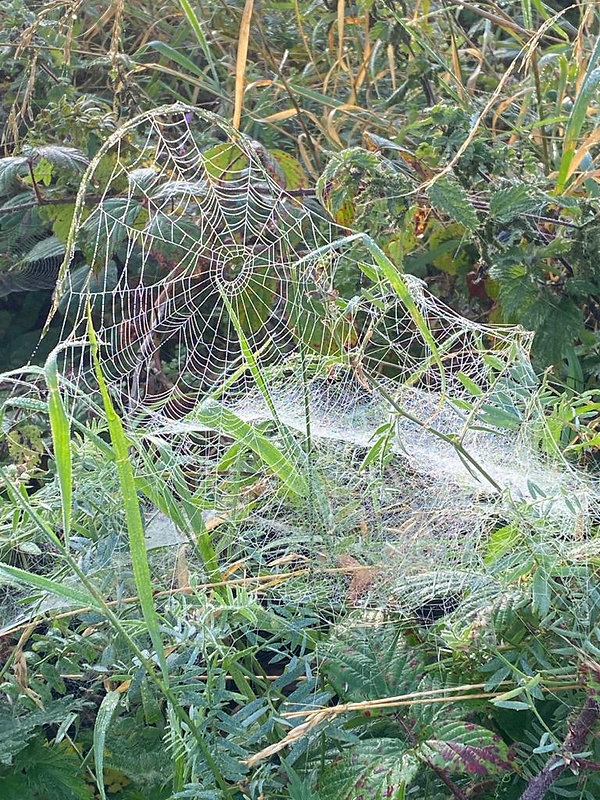 spider web.jpeg
