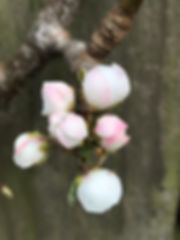 april fb5.jpeg