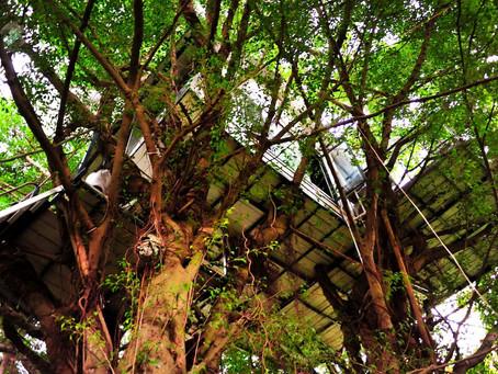 體驗分享 有種Bucketlist 叫在樹屋待一個晚上