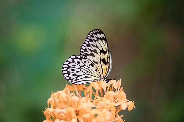 Butterflies-31.jpg