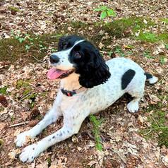 Daisy Dog!