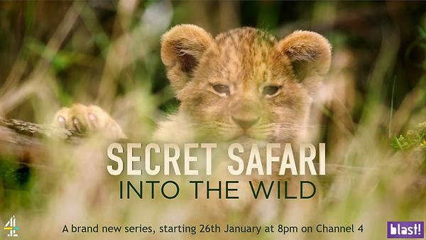 secret safari.PNG
