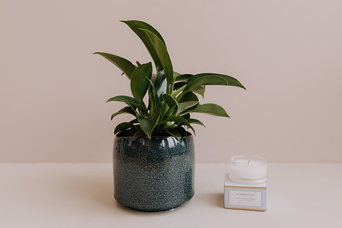 Mother's Day Plant Package - Plant + Mini Candle