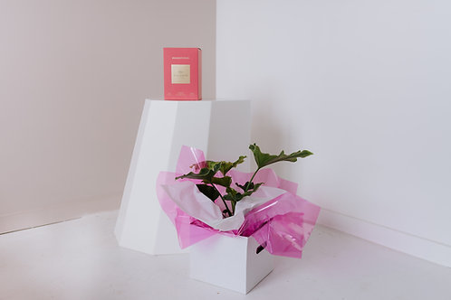 THE GIFT PACK - POTTED PLANT + LARGE CANDLE