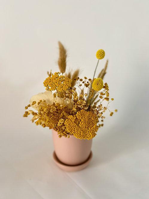 Mini Mustard