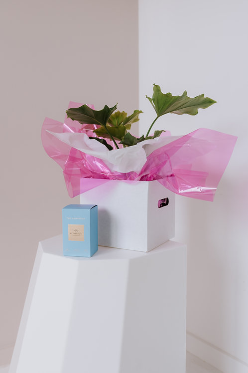 THE GIFT PACK - POTTED PLANT + SMALL CANDLE