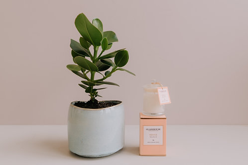 Mother's Day Plant Package - Plant + Small Candle