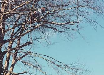 Choosing an Arborist