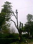Tree work essex
