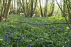 woodland Management Essex
