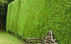 Hedges and Shrubs Essex