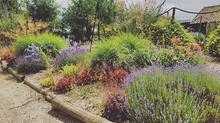 Prune for Blooms & Wildlife Boosts!