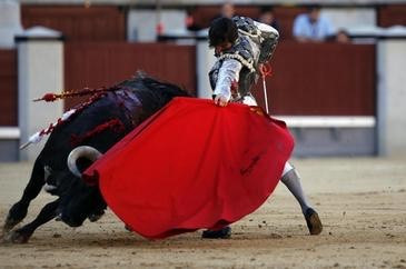 Matadoren og tyren