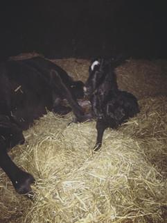 140418 Filly Foal 3.jpg