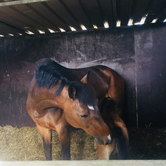 Filly By a son of QuickStar X Heartbreaker x Contender mother May 2018 2.jpg