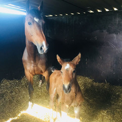 Filly By a son of QuickStar X Heartbreaker x Contender mother May 2018 3.jpg