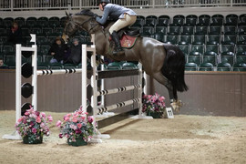 Jalanna - 7yr old DC in the Foxhunter.jp