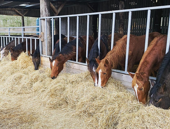 Young stock Barn 3