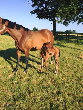 Filly By Pacinos Cruise.jpg