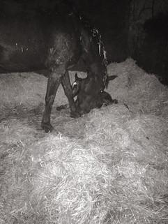 140418 Filly Foal 2.jpg