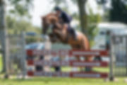 Flintstone 1 Hickstead Sept 2018.jpg