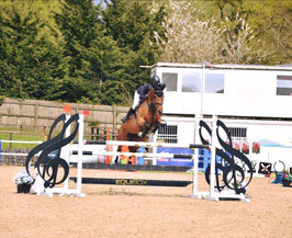 Arkos Girl Z - 6yr old By Arko III x Non stop May Chepstow 2.jpg
