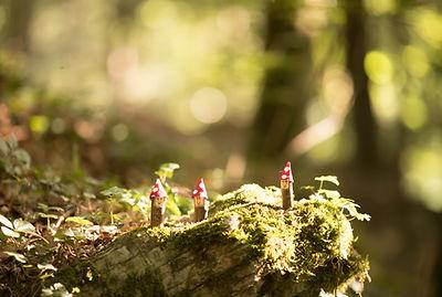 Waldzwerge, Familie, Kinder, Natur, Wald
