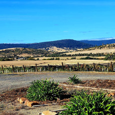 View from Brinktop Wines at Penna, to the valley below.