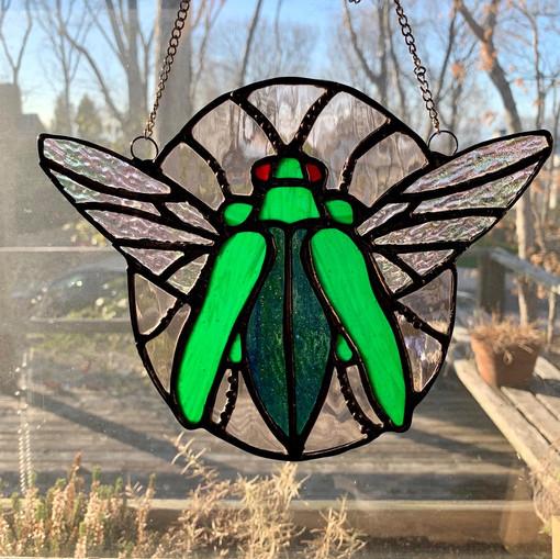 Beetle (differing lighting)