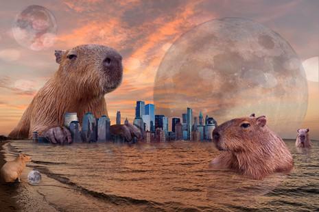 Capybara in the Peconic