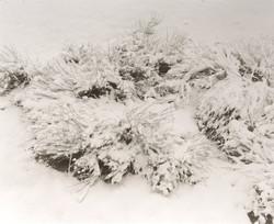 トノパ−の朝は雪景色で始まる。嬉しくなってカメラを担いで歩き回った。