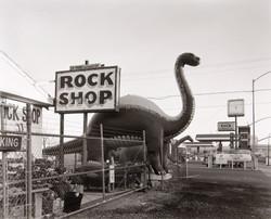 朝バイテンを抱え歩いていると恐竜に出会った。