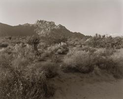 モハヴェ砂漠を走る時はなるべく昼間に走るべきだ。ガスは満タンで。