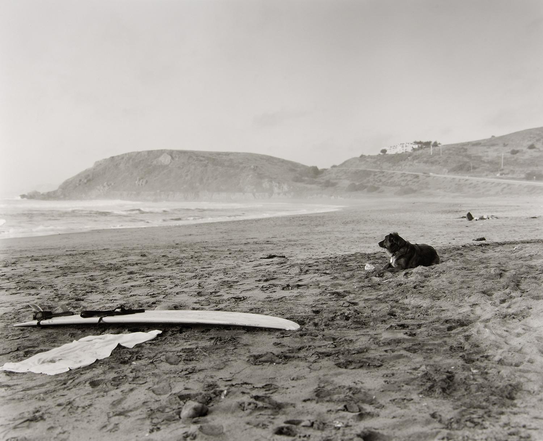 バークレーの海岸。沖に出ている主人をじっと待つ犬がいた。
