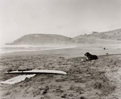 バークリーの海岸線。犬が飼い主を待っていた。