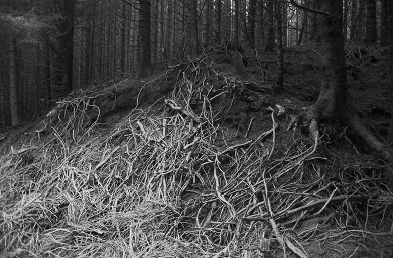 woodinforest.jpg