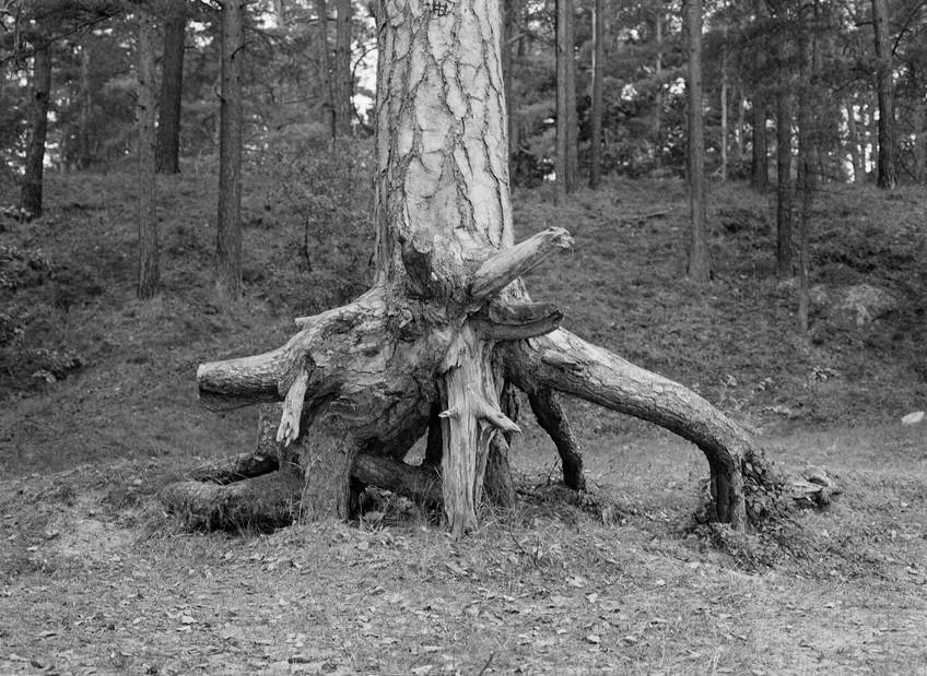Emma-Sandström-Perhaps of Ritual Signifi