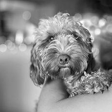 Dog friendly dorset
