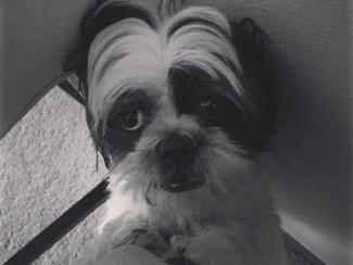 Life Is Unpredictable; My Dog Has A Tumor