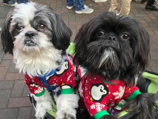 Christmas Party For Dogs