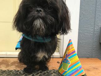 Manhattan's 1st Birthday